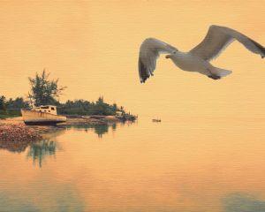 180412oldfishingboatseagulcrtt.jpg