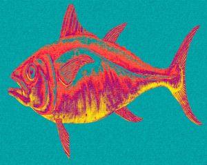 8075fish1gradtqpb8x10tt.jpg